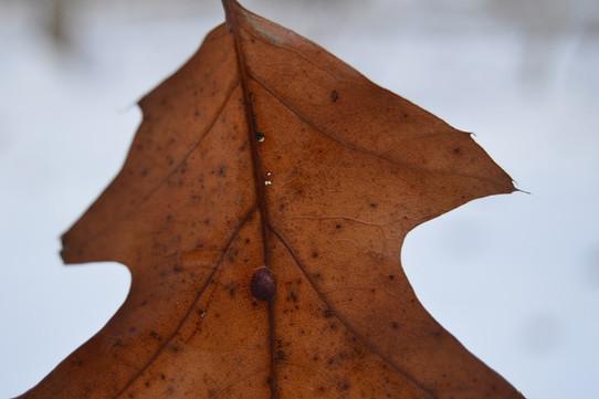 One Brown Leaf