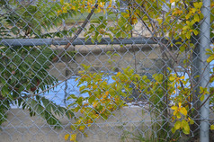 Chain Link Water