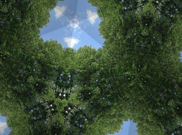 Full Tree Sky