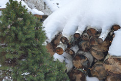January Wood Pile Snow