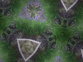 Kld Iris Garden