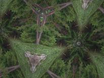 Kld Tree Grove