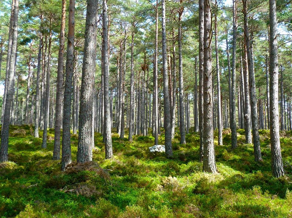Финляндия лес