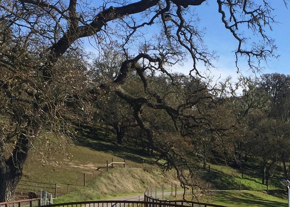Z Ranch Gate