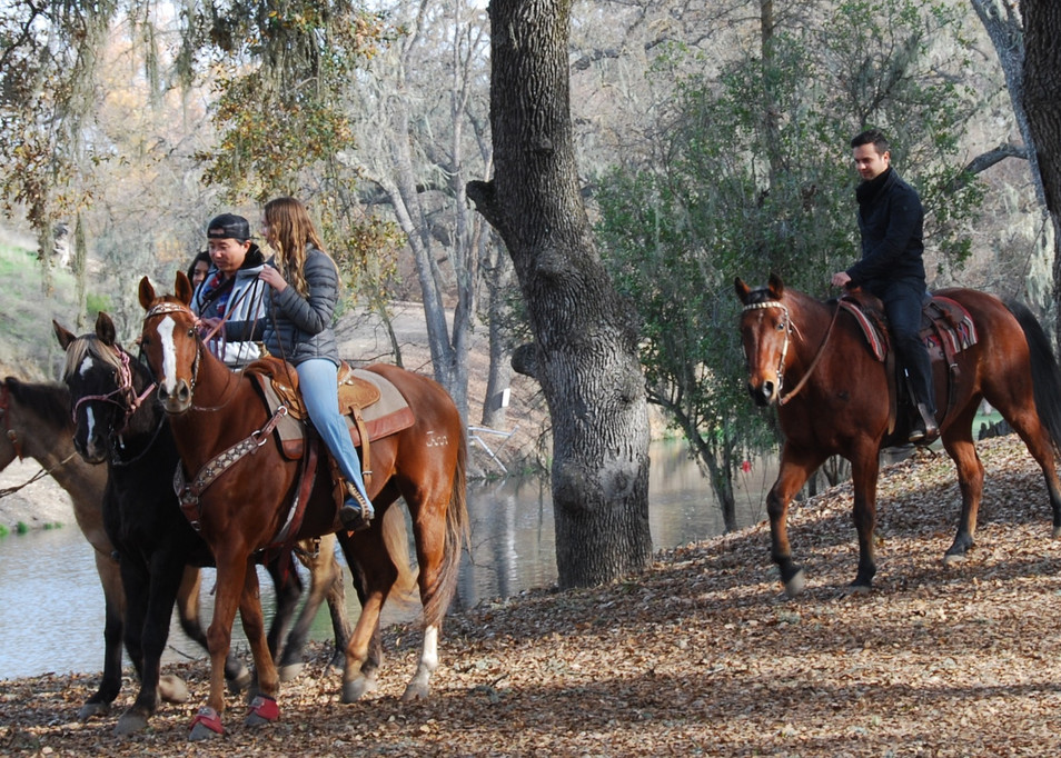 Horse Trail Ride