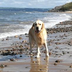 Walkies in the Waves