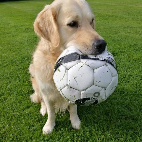 Falkor's Football Fun