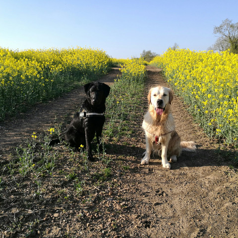 Evening Spring Walkies