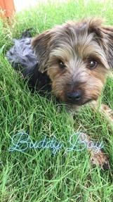 BUDDY - Adopted!