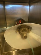 pup with cone.jpg