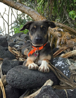 Goose - Adopted!