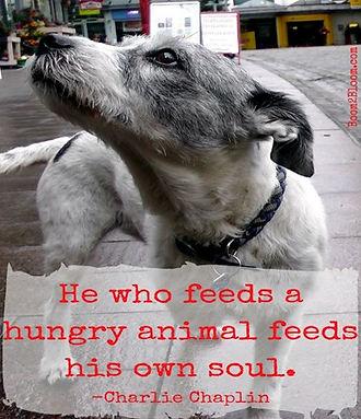 Hungry dog.jpg