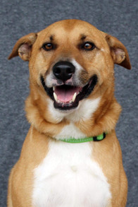 Scout - Adopted!