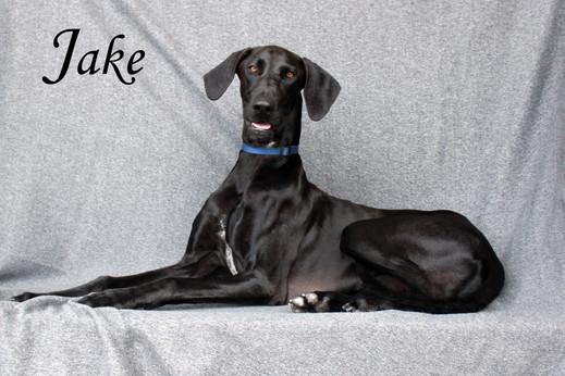 JAKE - Adopted!