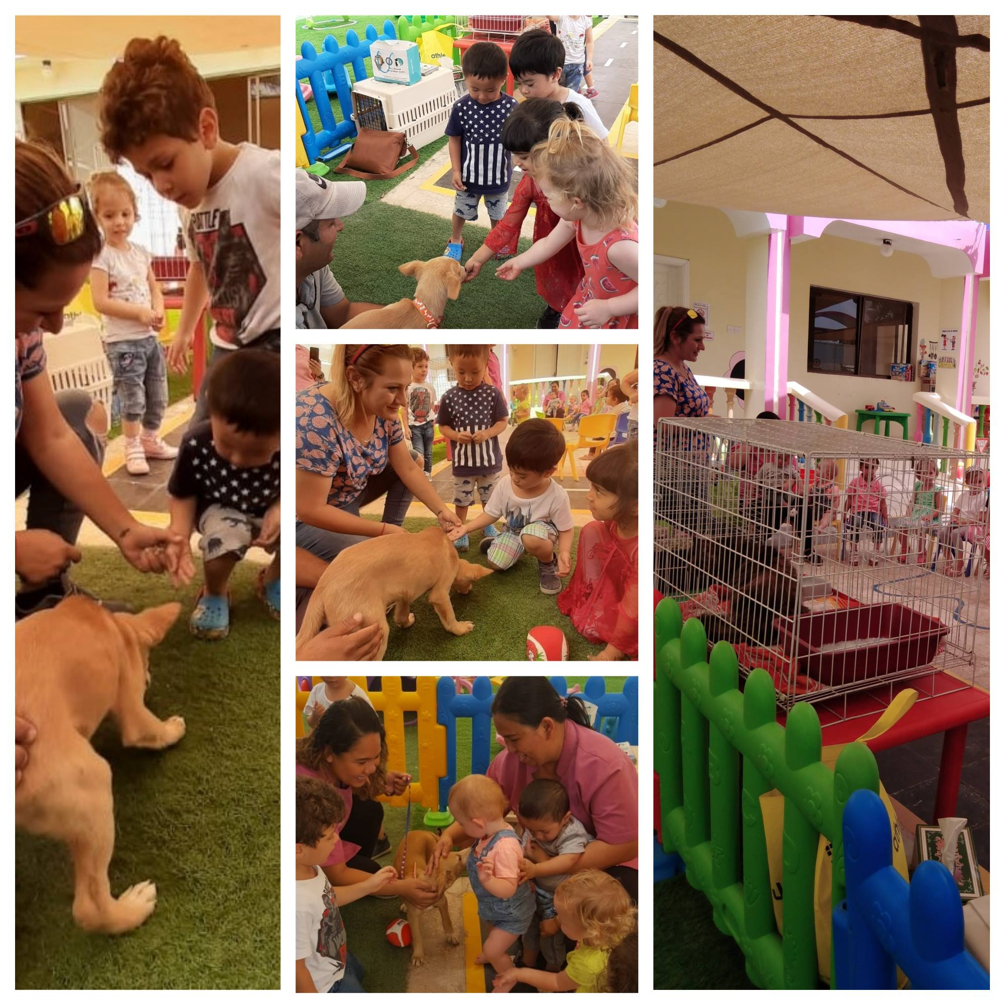 RAK Animal Welfare visits our Khuzam Branch