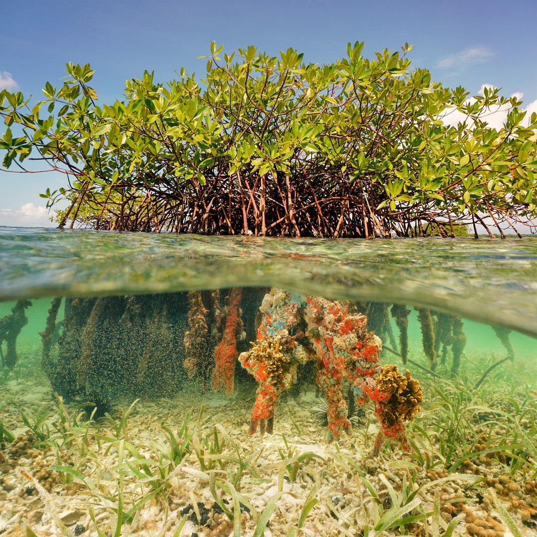 Split image half above and underwater of