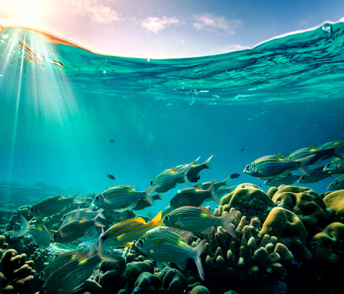Tropical ocean life. Coral reef full of