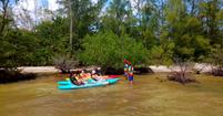 mangrove briefing