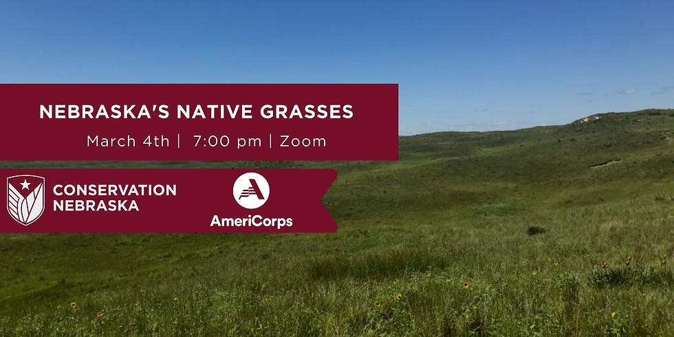 Nebraska's Native Grasses
