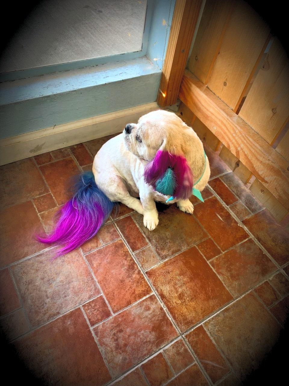 Make your pup pop!!