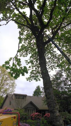 2018 Pruning