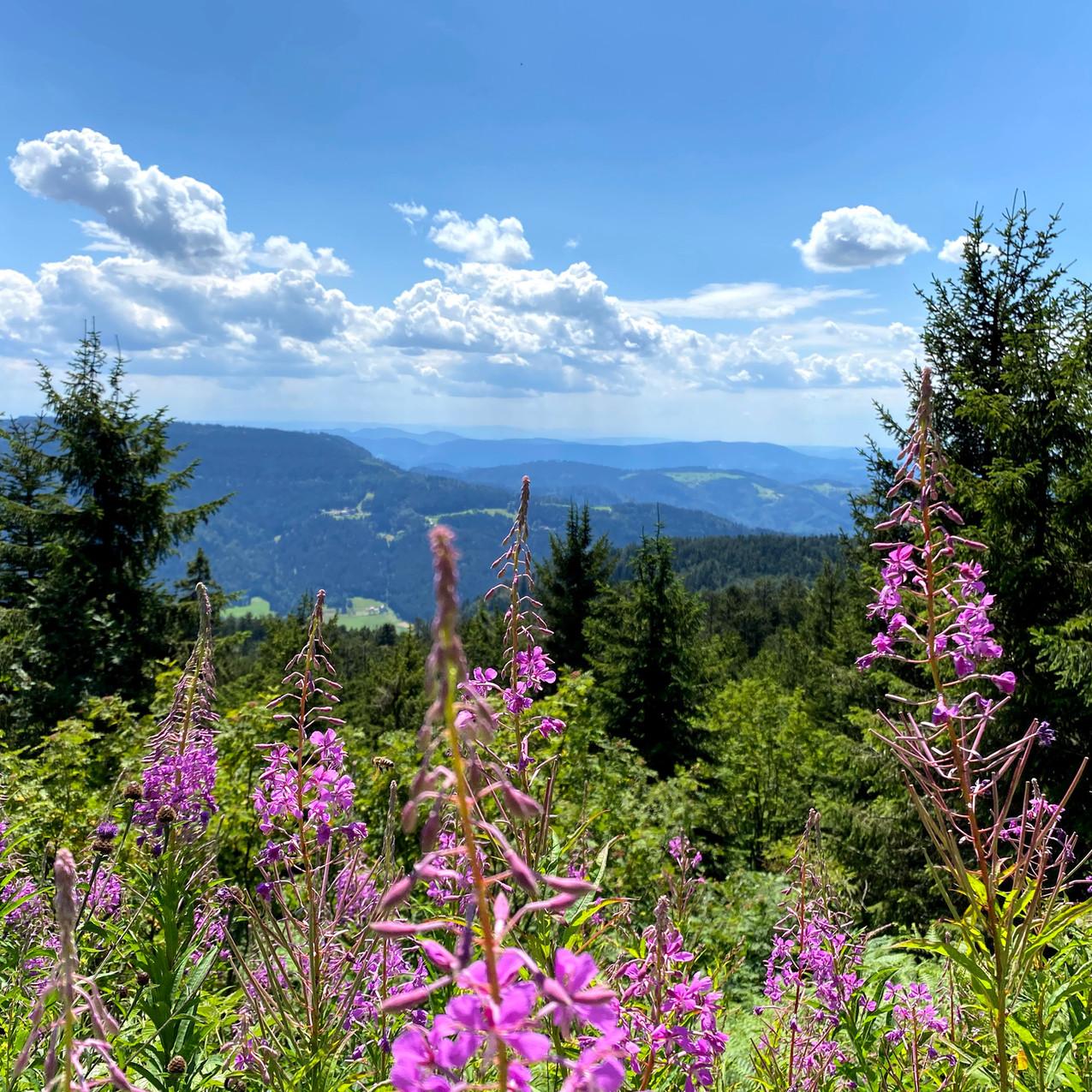 Schwarzwald, Duitsland