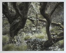 Olivier Pasquiers - Etre arbre