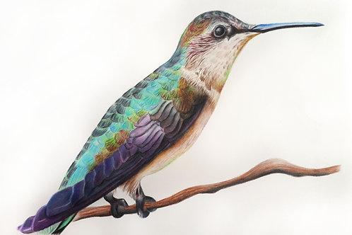Ilustração Pássaro, original