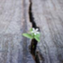flower in cracked wood