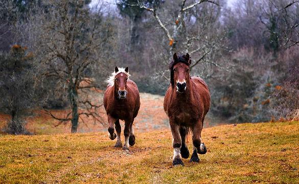 horses-1984977.jpg