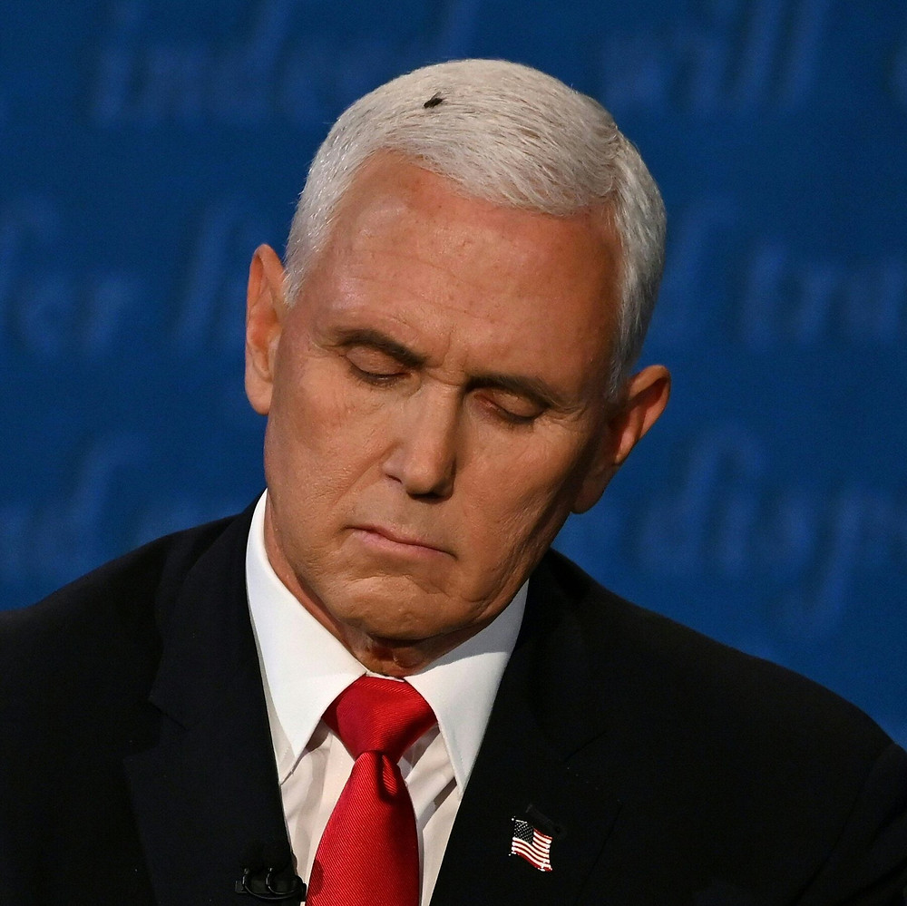 Mike Pence looking down with a fly on his head.