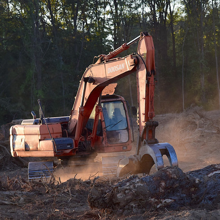Killing Our Trees And Our Future