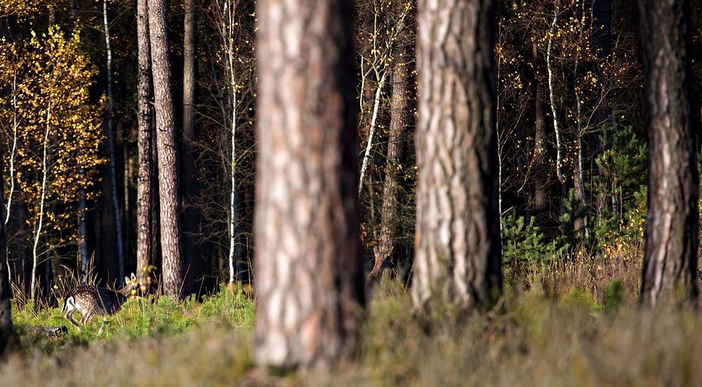 közösségi erdő ültetés