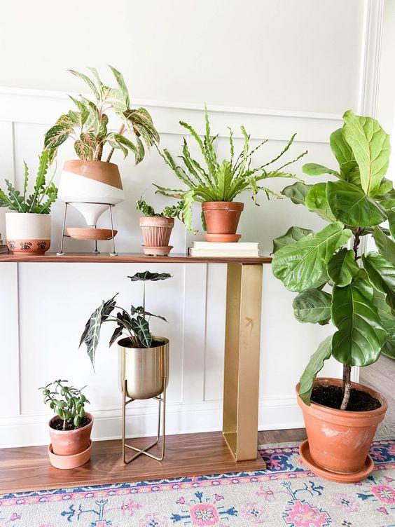 növények az előszobában
