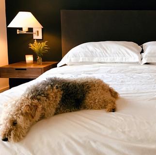 kutyus-az-ágyon.jpg
