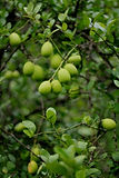 Fruits_02.jpg