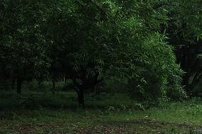 Foliage_12.jpg