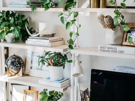 Why you need these plants in your office now.