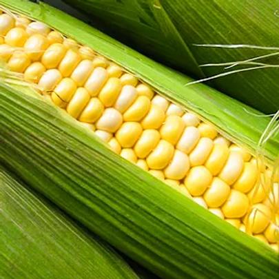 HARPER FARM SUPERSWEET BI-COLOR CORN