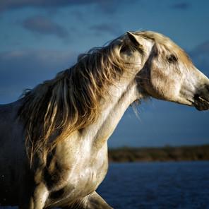 Zousmer Horses of Camargue 24