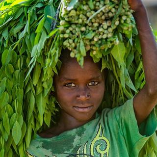 Zousmer Elegant Ethiopia 1