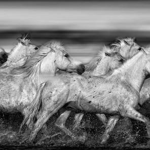 Zousmer Horses of Camargue 21