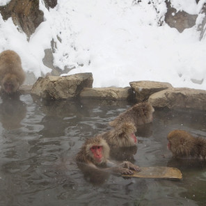 Zousmer Snow Monkeys 33