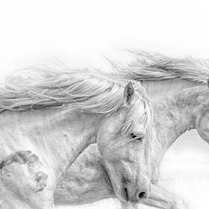 Zousmer Horses of Camargue 4