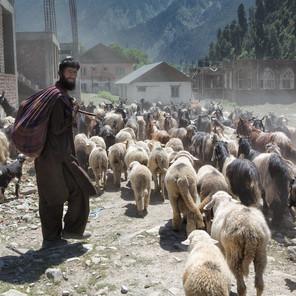 Zousmer Kashmir