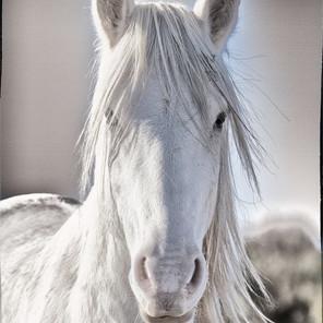 Zousmer Horses of Camargue 16