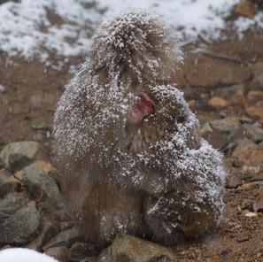 Zousmer Snow Monkeys 23