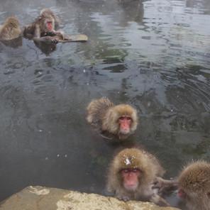 Zousmer Snow Monkeys 12