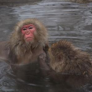 Zousmer Snow Monkeys 22