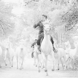 Zousmer Horses of Camargue 14